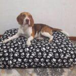 Colchones para perros lavables