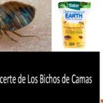 Insecticida para colchones